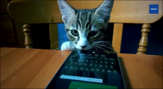 Lumia 930 and Cats